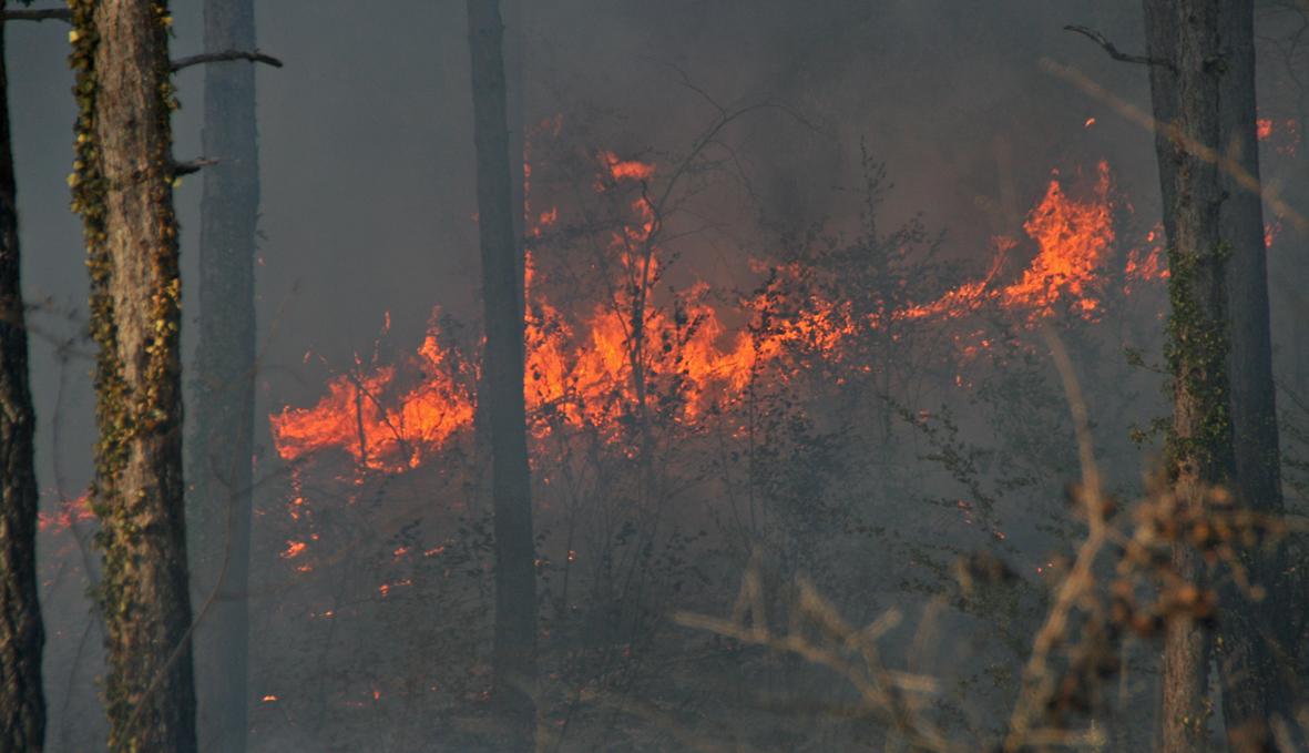 Important feu de forêts sur le terrain militaire à Caucalières