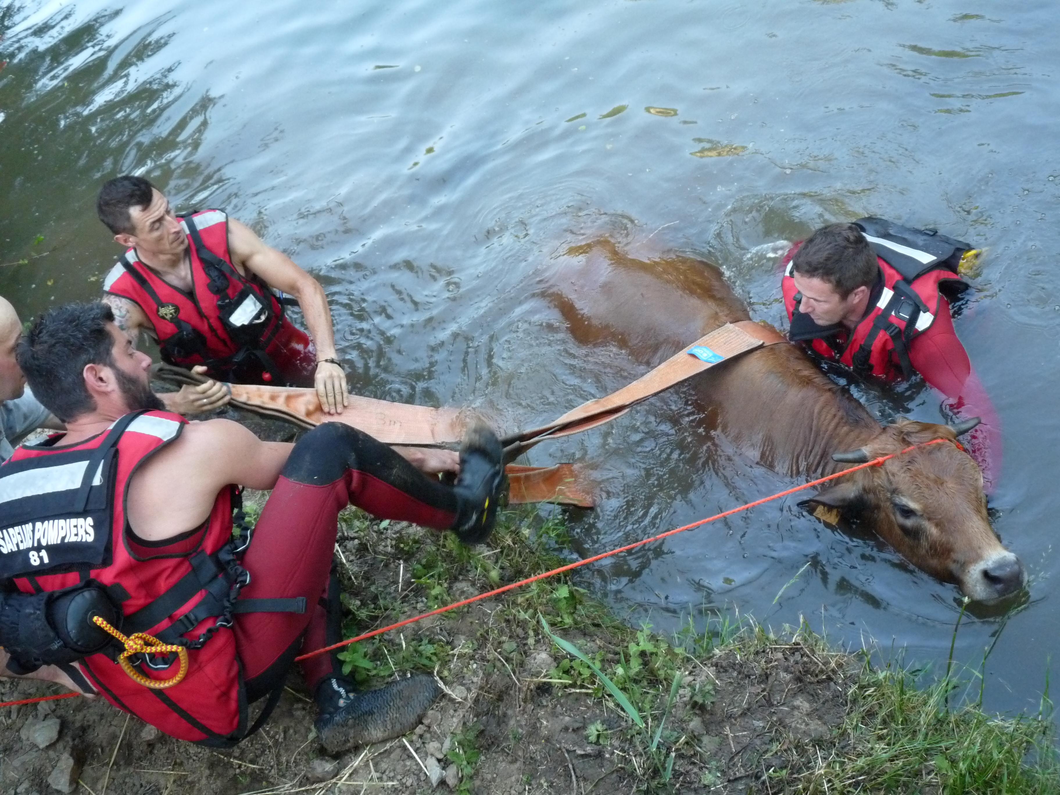 Sauvetage d'animal sur la commune de Tanus