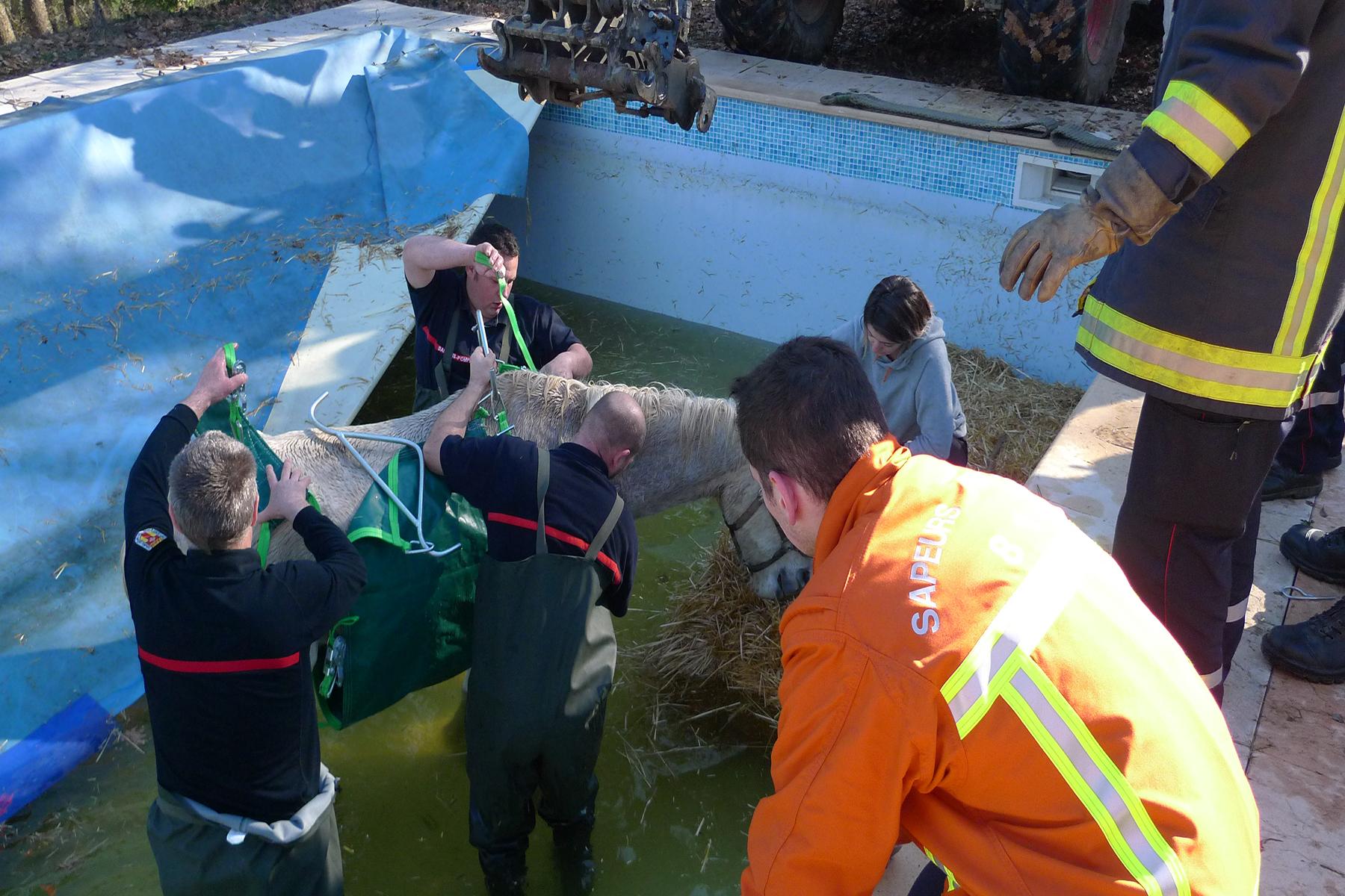 Sauvetage d'animal à Carmaux